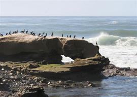 birdrock1